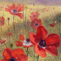 Poppies-on-the-Biblical-Land-2-1